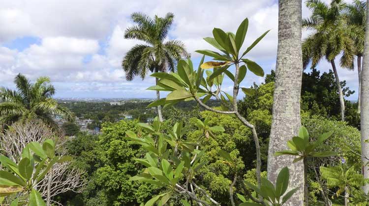 View from Finca Vigia Cruising to Cuba Excursion