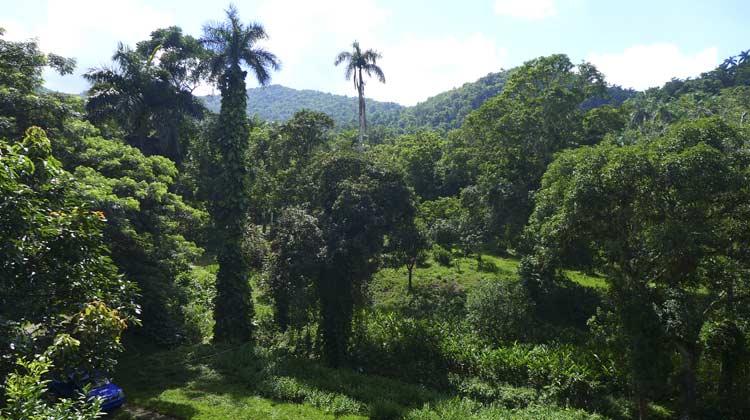 Las Terrazas Forest